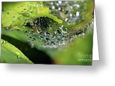 On Drops Of Dew Greeting Card