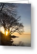 On Fire - Bright Sunrise Through The Willows Greeting Card