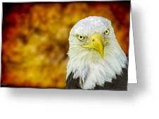 On Fire The American Bald Eagle Greeting Card