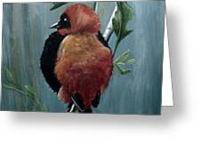 On Safari - Red Biship Greeting Card