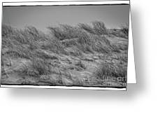On The Dunes, Florence Greeting Card