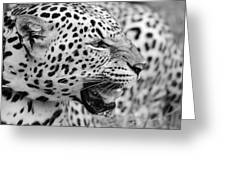 On The Hunt Bw Greeting Card