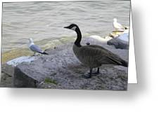 On The Lakefront Greeting Card