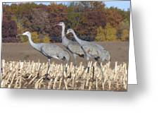 On The March . . . Greeting Card