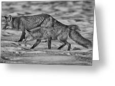 On The Prowl Bw Greeting Card