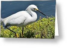 Great Egret On Prowl >> On The Prowl I Photograph by Linda Brody