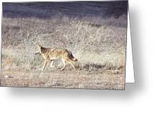 On The Prowl Greeting Card