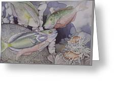 On The Reef Greeting Card