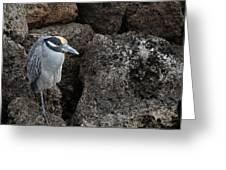 On The Rocks - Yellow-crowned Night Heron Greeting Card