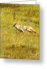 On The Run ... Montana Art Photo Greeting Card