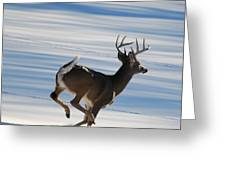 On The Run Greeting Card by Todd Hostetter