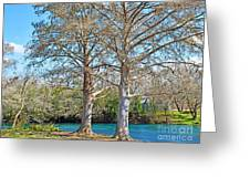 On The San Marcos River Texas Greeting Card