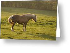 On The Sunny Meadow Greeting Card