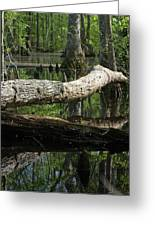 On The Swamp Greeting Card
