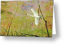 On The Wing Greeting Card by Belinda Greb