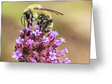 On Top Of The World - Bee Style Greeting Card