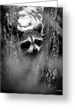 On Watch - Bw Greeting Card