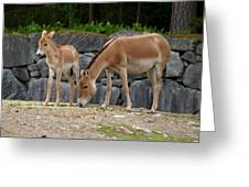 Onager  Greeting Card