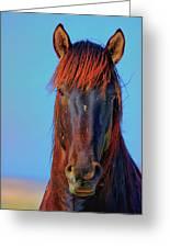 Onaqui Wild Stallion Portrait Greeting Card