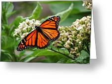 Once Upon A Butterfly 001 Greeting Card
