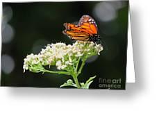 Once Upon A Butterfly 005 Greeting Card