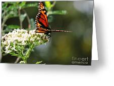 Once Upon A Butterfly 006 Greeting Card