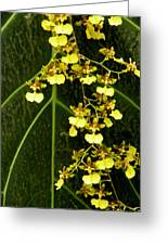 Oncidium Orchids Greeting Card