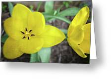 One And A Half Yellow Tulips Greeting Card