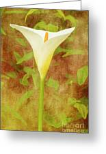 One Arum Lily Greeting Card