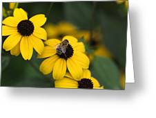 One Bee Over The Flower's Nest Greeting Card