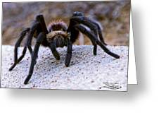 One Big Hairy Spider Greeting Card