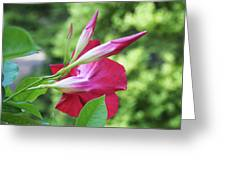One Bloom Greeting Card