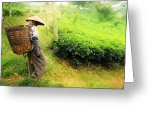 One Day In Tea Plantation  Greeting Card
