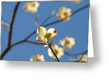 One Dogwood Blooms Greeting Card