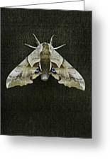 One Eyed Sphinx Moth Greeting Card