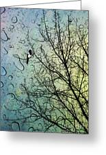 One For Sorrow Greeting Card by John Edwards