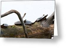 One Hiding Turtle Greeting Card