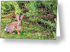 One Hop From The Warren Greeting Card