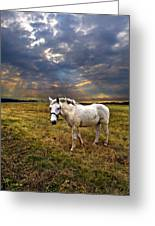 One Horse Greeting Card
