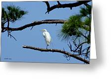 One Leg Perch - Debbie May Greeting Card