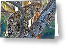 One Little Cheetah Sitting In A Tree Greeting Card