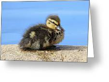 One Little Duckling Greeting Card