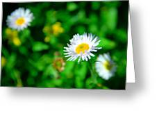One Little Wildflower Greeting Card
