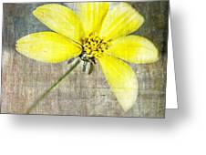 One Must Have Sunshine Freedom And A Little Flower Greeting Card