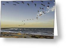 One Pelican Two Pelican Three Pelican Greeting Card