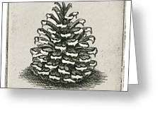 One Pinecone Greeting Card