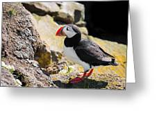 One Puffin In Iceland Greeting Card