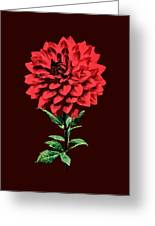 One Red Dahlia Greeting Card