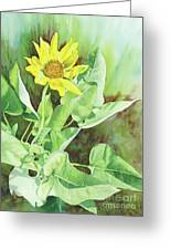 One Rooting In The Sun Greeting Card