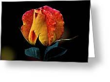One Rose Greeting Card